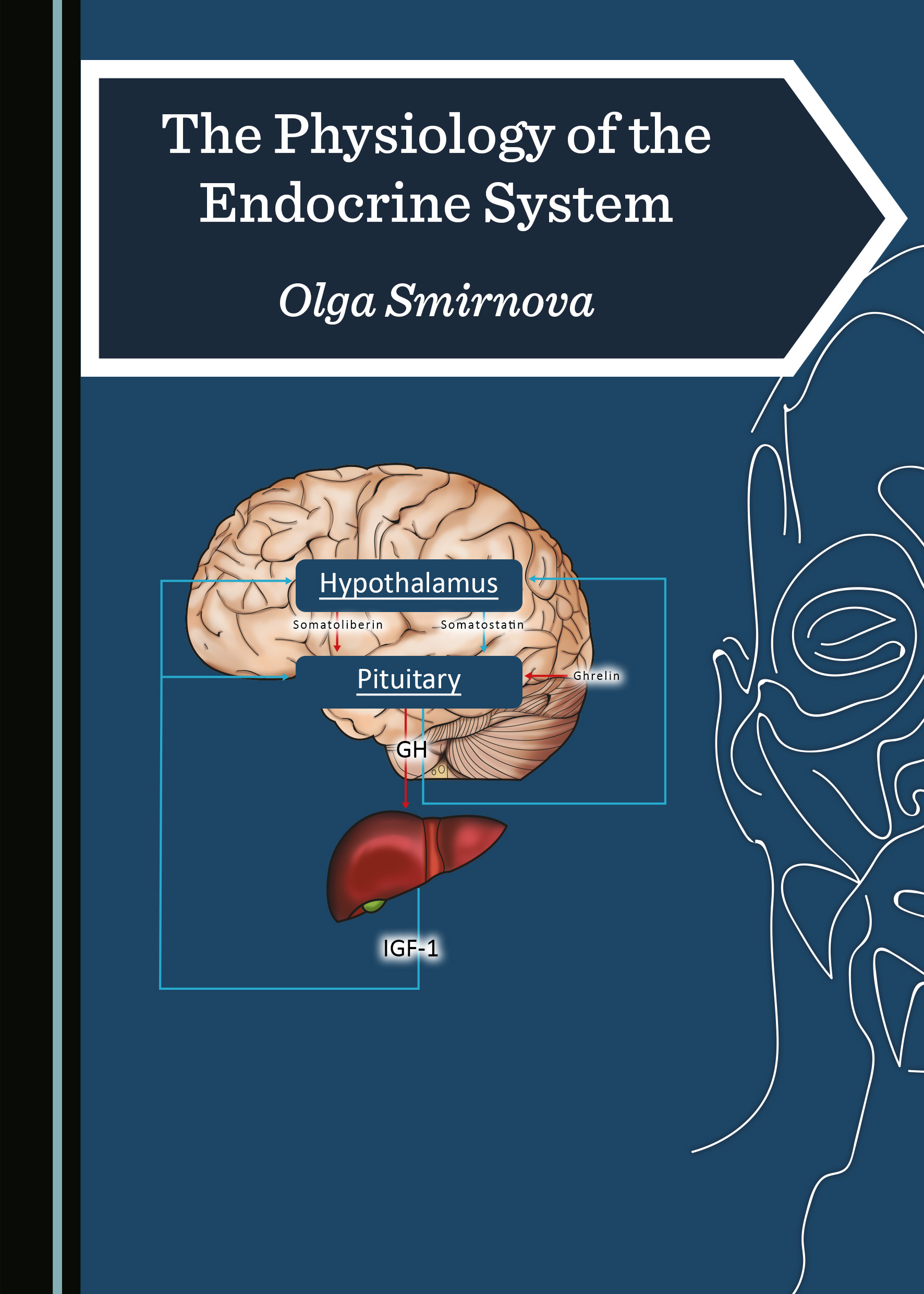 The Physiology of the Endocrine System
